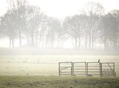 Morning Fog (simonpfotos) Tags: dutchlandscape fog