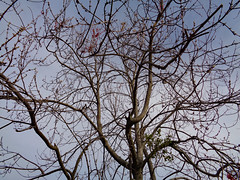 Branches And Sky. (dccradio) Tags: lumberton nc northcarolina robesoncounty nature natural sky march spring springtime morning sunday sundaymorning goodmorning tree treebranch branch branches treebranches treelimb treelimbs sony cybershot dscw830