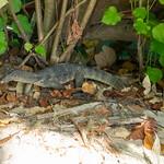 Railay (Krabi)