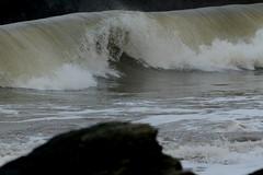 IMG_0528 (monika.carrie) Tags: monikacarrie wildlife scotland aberdeen waves