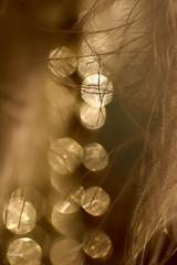 JE CHOISIS LA LUMIERE-iridescent abstract - pick two- macro mondays (FLOCVROFF 1M views Thanks to you all) Tags: chivaroff plume feather feder light bokeh bokehlicious macromondays picktwo