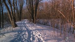 EOS_0119-1406 (DAN PHOTOGRAFIX) Tags: canon eos 6d reflex rehel stmichel paysage hiver winter sun soleil cold froid tree arbre ecorce bark snow neige glace ice