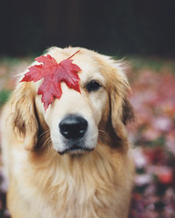 My dog loves the autumn http://bit.ly/2svJVqD (freewayzone) Tags: travel nature explore vaction trilifestyle fitness instagood motivation fit gym healthy health photooftheday workout training bodybuilding eatclean strong determination cardio fashion fitspo diet active healthychoices fitnessaddict exercise getfit train cleaneating fitnessmodinspiration love life quotes art like beautiful lifestyle follow success motivationalquotes inspire inspirationalquotes fitel instahealth