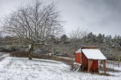 La cabane rouge (Lucille-bs) Tags: europe france bourgognefranchecomté bourgogne côtedor ahuy hiver neige arbre cabane rouge paysage