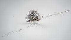 one is flying away - Einer fliegt davon (ralfkai41) Tags: schnee minimalism baum winter nature landschaft vögel birds landscape tree minimalismus natur snow