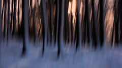 ICM 005 (PeskyMesky) Tags: aberdeen lochside bridgeofdon icm intentionalcameramovement forest tree trees snow winter landscape longexposure canon5d canon eos