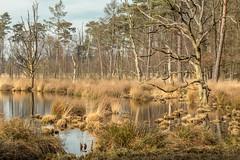 landschap drenthe (Marcel Boelen) Tags: landschap bos water bomen drenthe