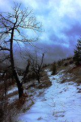 Balkan mountain trees (Creativespirit13) Tags: mountains nature balkanmountans snow clouds bulgaria