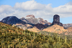 Desert Snow (Buck--Fever) Tags: saguaros saguaro arizona arizonaskies arizonadesert arizonawonders earthnaturelife desert desertsnow gilariverarizona landscape nature centralarizona canon60d tamron18400lens