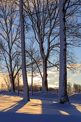 Morning Sun (J. Pelz) Tags: landscape winter nature växjö sweden winterscene sunrise tree snow kronobergcounty se