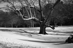 Limbs (David Stebbing) Tags: blackandwhite trees flickr snow