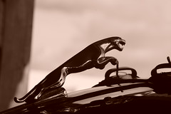 Jaguar XK150 1958, HRDC Track Day, Goodwood Motor Circuit (11) (f1jherbert) Tags: sonya68 sonyalpha68 alpha68 sony alpha 68 a68 sonyilca68 sony68 sonyilca ilca68 ilca sonyslt68 sonyslt slt68 slt sonyalpha68ilca sonyilcaa68 goodwoodwestsussex goodwoodmotorcircuit westsussex goodwoodwestsussexengland hrdctrackdaygoodwoodmotorcircuit historicalracingdriversclubtrackdaygoodwoodmotorcircuit historicalracingdriversclubgoodwood historicalracingdriversclub hrdctrackday hrdcgoodwood hrdcgoodwoodmotorcircuit hrdc historical racing drivers club goodwood motor circuit west sussex brown white sepia bw brownandwhite