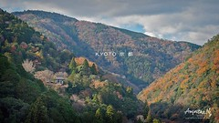 2019#10 (Augustinwee Photography) Tags: 日本 京都 touristattractions nature landscape vacation tour travel trail outdoors hiking japan arashiyama kyoto winterseason forest trees mountains sunrise