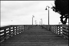 View Down the Pier (greenschist) Tags: lights california usa cayucos tree asahipentaxspotmaticii pier birds blackwhite film supertakumer55mmf18 35mm analog cayucospier kodaktrix400