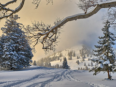 Winter Wonderland - Sudelfeld (W_von_S) Tags: sudelfeld winter winterlandschaft winterpanorama winterwonderland snow schnee berge mountains trees bäume light licht alpen alps snowlandscape snowscape schneelandschaft snowshoehike bavaria bayern germany deutschland landschaft landscape paysage paesaggio panorama natur nature wvons werner sony sonyilce7rm2