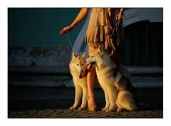 three animals (Armin Fuchs) Tags: arminfuchs stpetersburg russia dogs woman light leg legs sunset avecunepetitepincéedegrain grain afternoon photographeanimal jazzinbaggies