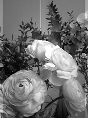 harada-flowers-92 (annie harada) Tags: flowers hana blumen fleurs bouquet noir et blanc black white