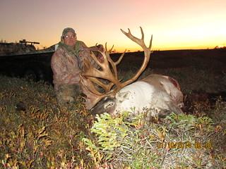 Newfoundland Caribou Hunt, Moose, Bear Hunting 169