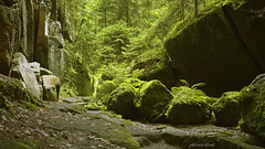 Barium (PhotonenBlende) Tags: moss trees landscape path saxonswitzerland elbsandstein saxony green enchanted fineart outdoor forest rocks sandstone fern fabolous nature wilderness