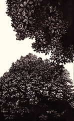 Trees (calin-h) Tags: inkart inking inkdrawing inkaholic artonpaper graphicart art graphic handdrawing sketch sketchbook sketching drawing drawings drawn