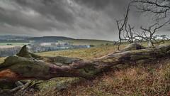 Hike across Ivinghoe Beacon (marcus.jayone) Tags: nikon1020mm nikond5300 hdr fallentree landscape ivinghoebeacon