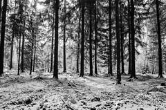 Evocation (Tom Levold (www.levold.de/photosphere)) Tags: bw köln königsforst forest wald d7000 nikon bäume wood snow trees sw schnee cologne