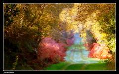 Le Chemin....... 2/2 (faurejm29) Tags: faurejm29 canon sigma paysage nature