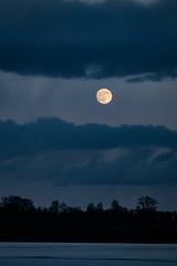 The moon! (tomsbokums) Tags: jupiter vintagelens