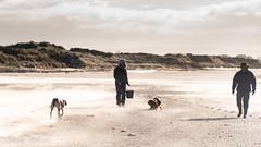 standoff (RCB4J) Tags: ayrshire ayrshirecoast babygrace clydecoast firthofclyde irvinebeach jakob rcb4j ronniebarron scotland siameselurcher trailhound adventure art beach dogwalkadventures dogs photography sandstorm severeconditions spectactular windy
