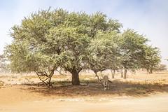 _RJS4692 (rjsnyc2) Tags: 2019 africa d850 desert dunes landscape namibia nikon outdoors photography remoteyear richardsilver richardsilverphoto safari sand sanddune travel travelphotographer animal camping nature tent trees wildlife