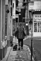 Poils au dos (Mathieu HENON) Tags: leica leicam noctilux 50mm m240 laphotodulundi monochrome nb bnw bw france paris 1ier arrondissement street streetlife streetphoto photoderue fourrure manteau trottoir chiens promenande palaisroyal ruedebeaujolais parisien parisianstyle