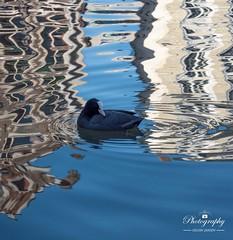 Water art Gent (gelein.zaamslag) Tags: geleinjansen nikond5500 gent belgium belgie flanders vlaanderen water waterripple art artofnature
