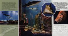 Nyíregyháza - Sóstó Zoo Ócenárium, A legek állatkertje…; 2017_3, Szabolcs-Szatmár-Bereg co., Hungary (World Travel library - The Collection) Tags: nyíregyháza sóstó zoo ócenárium ocenarium 2017 állatkert fish colors colours szabolcsszatmárbereg hungary ungarn magyarország travel center worldtravellib holidays tourism trip vacation papers photos photo photography picture image collectible collectors collection sammlung recueil collezione assortimento colección ads online gallery galeria touristik touristische broschyr esite catálogo folheto folleto брошюра broşür documents dokument