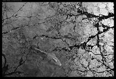 _Z715042 copy (mingthein) Tags: thein onn ming photohorologer mingtheincom availablelight bw blackandwhite monochrome landscape japan japanese traditional garden tokyo nezu nezumuseum nikon z7 nikkor z 24704 s