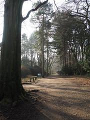Meanwood Park2019 (oneofmanybills) Tags: park talltrees trees spring light meanwood leeds path shadows