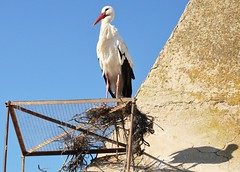 CÁCERES (EXTREMADURA/ESPAÑA/SPAIN) (DAGM4) Tags: extremadura provinciadecáceres españa europa europe espagne espanha espagna espanya espana espainia spain spanien birds naturaleza nature 2019 cáceres