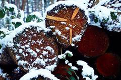wood (Jos Mecklenfeld) Tags: winter snow schnee sneeuw forest wald bos nature natur natuur nulbos westerwolde sonya6000 sonyilce6000 selp1650 sonyepz1650mm niederlande nederland terapel groningen netherlands nl