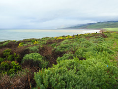 Jalama Beach Coastline (2080cronos1) Tags: jalama beach california coast coastline green blue yellow flowers cloudy landscape plants gloomy hazy misty