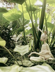 Plantiful (Koshou) Tags: nature plants green meditation doll dollleaves dollcheatu dollchateau bunny rabbit fairy cute balljointeddoll bjd