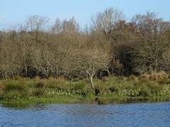 Life on the margin (Phil Gayton) Tags: water meadow grass reed tree sky snipe island river dart high tide totnes devon uk