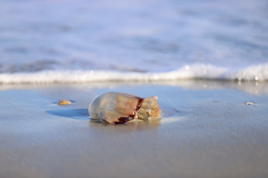The World's Best Photos of jellyfish and southcarolina