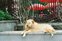 000010 (Ch0jiN) Tags: kodak ultramax 400 hongkong canon ae1 film street asia
