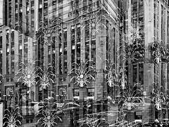Tiffany's / Lit Up (Demmer S) Tags: visual design holiday seasonal winter illuminated seasons december christmas tiffanys tiffanyco tiffany 5thavenue departmentstore display style decorated decorations festive lit lights christmaslights decorate decoration citylights storedisplay storefront windows lines repetition abstract superimposition multilayer multipleexposure multiexposure art digitalart ny newyork nyc newyorkcity manhattan eastcoast midtownmanhattan midtown bw monochrome blackwhite blackandwhite blackwhitephotos blackwhitephoto