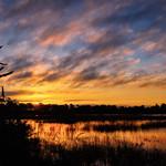 Sunrise over marsh at Babcock Wildlife Management Area near Punta Gorda, Florida thumbnail