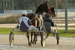 Berlin Trabrennbahn Mariendorf 27.1.2019 (rieblinga) Tags: berlin tempelhof mariendorf trabrennbahn sport pferde renntag 2712019