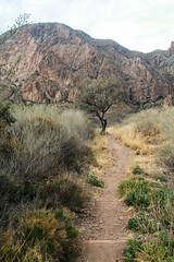 The Windows Trail