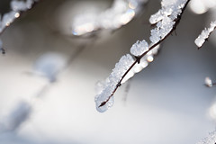 Icy (Tashata) Tags: nature outdoor outdoors beautiful bright branches ice bokeh white winter dof composition sony sonyrx10iv carlzeiss zeissvariosonnart frozen closeup cold frost