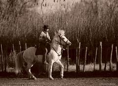 _DSC0665 (chris30300) Tags: camargue cheval