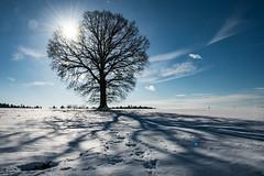 a perfect winter day (Florian Grundstein) Tags: bluesky winter sun star oak tree snow sunny skyscape clouds cloudscape landscape bavaria upperpalatinate nikon dx d500 florian grundstein nature footsteps
