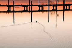 Bugwelle (pyrolim) Tags: heiligenhafen yachthafen ente stege bugwelle ostsee
